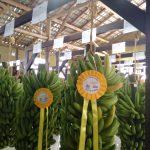 Luiz Alves a terra da cachaça - Festa da Banana