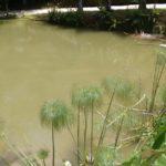 Cachaça Artesanal Dupipe lago