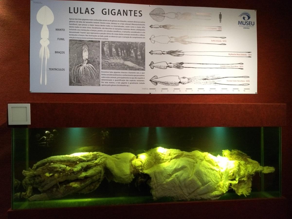 Museu Oceanográfico Univali Lula Gigante