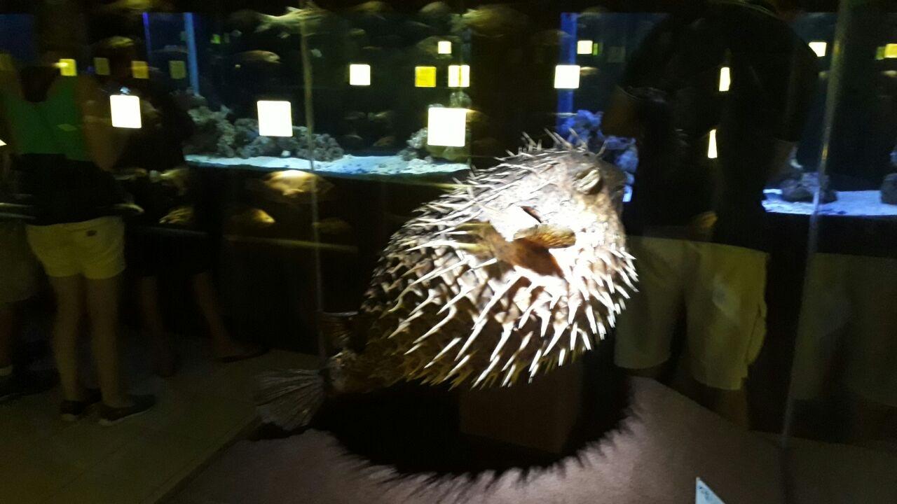 Museu Oceanográfico Univali Baiacu de Espinho