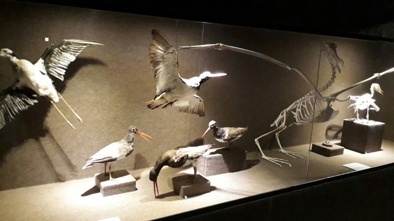 Museu Oceanográfico Univali Aves Marítimas