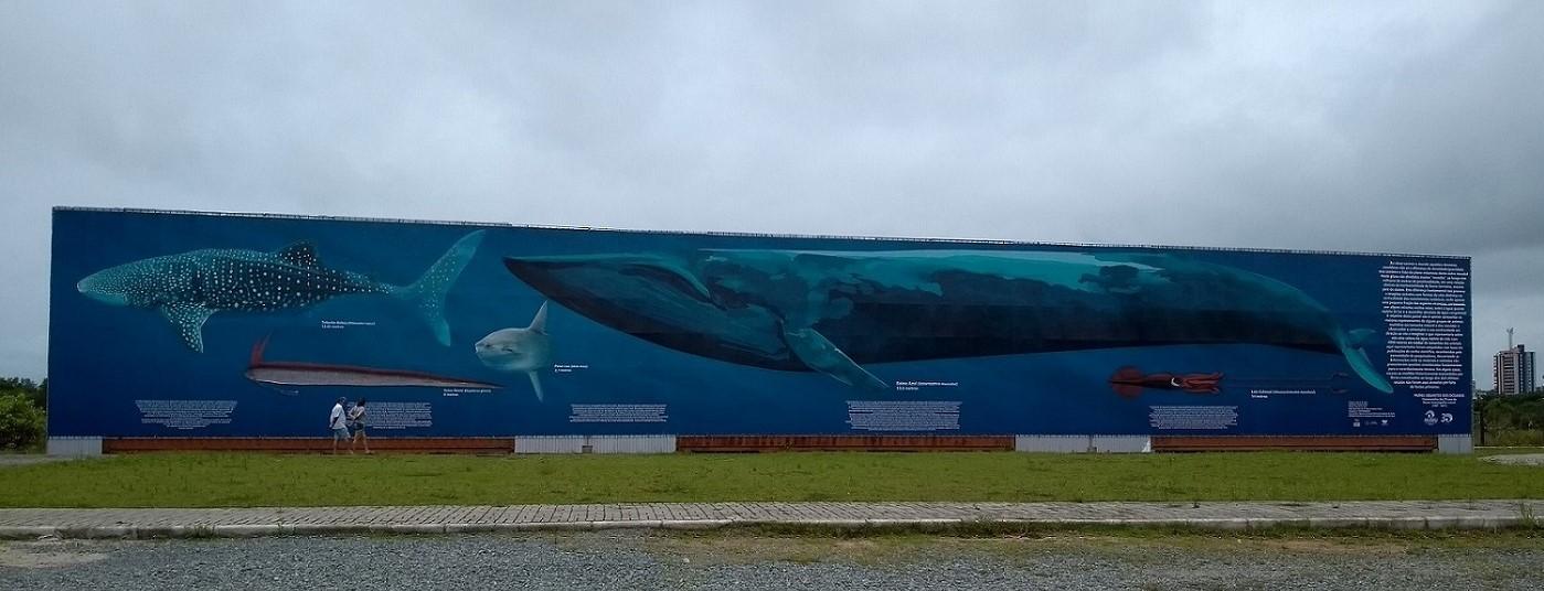 Museu Oceanográfico Univali Painel gigante