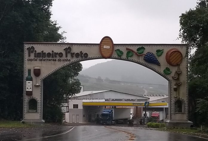 Pinheiro Preto Santa Catarina