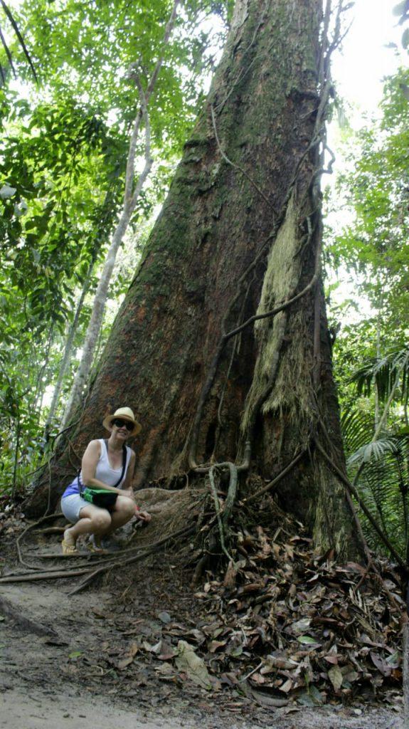 MUSA- Museu da Amazônia Manaus Angelim-Pedra