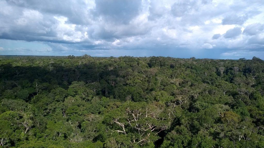 Vista da floresta