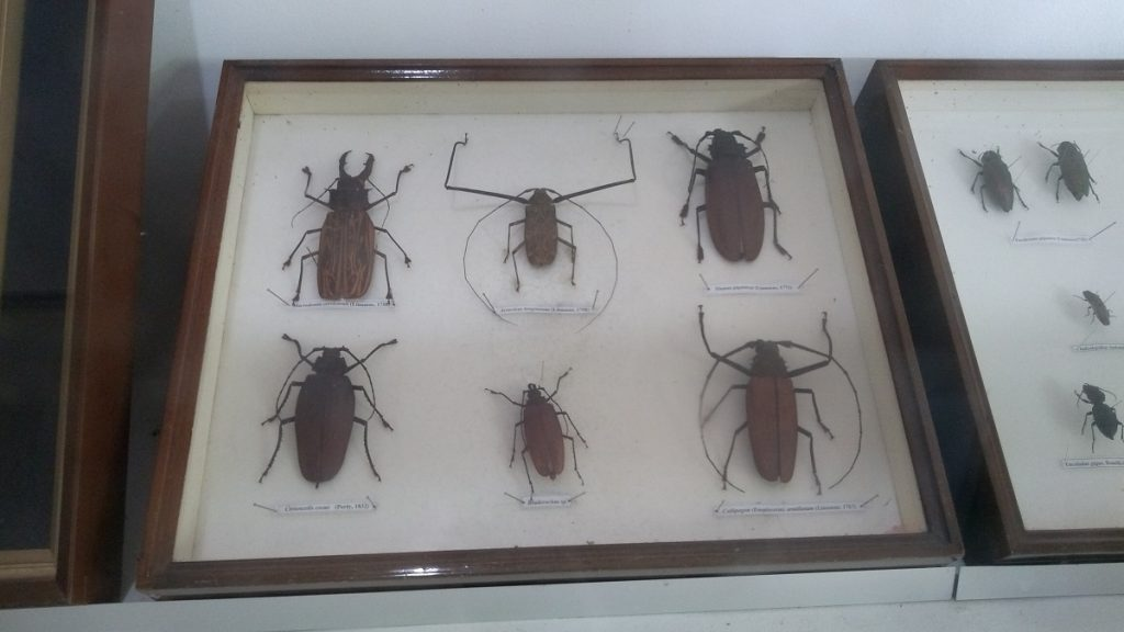 Zoológico do CIGS Sala Entomológica