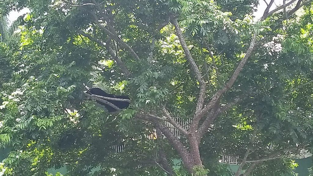 Zoológico do CIGS Pantera Negra