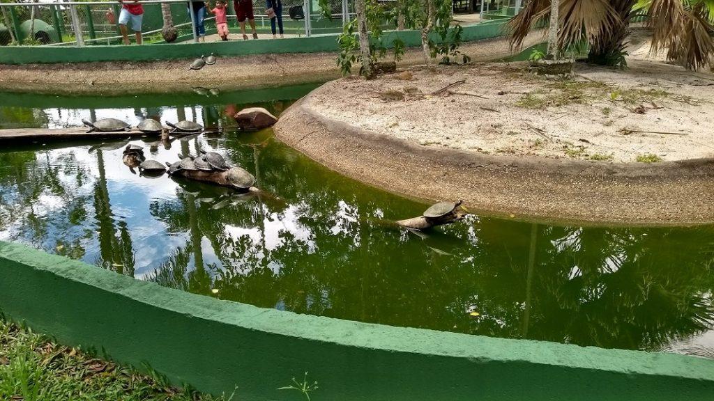 Zoológico do CIGS Viveiro dos Quelônios